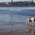 Un perro en la playa de San Lorenzo