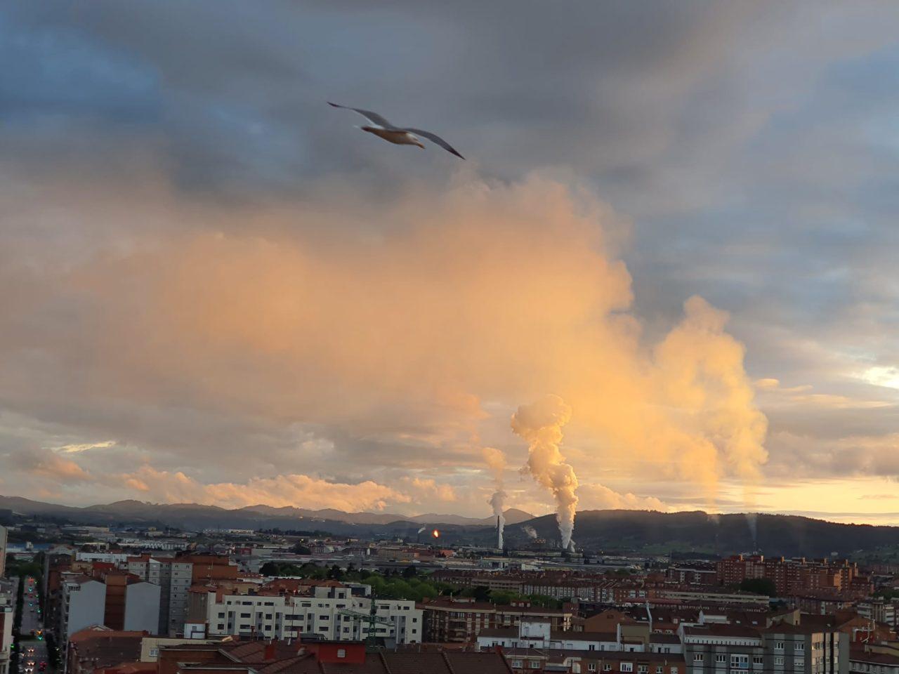(Foto: Coordinadora Ecoloxista d'Asturies)